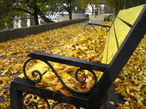 Псков. Скамейка на набережной в листьях
