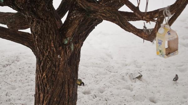 Дерево, кормушка и синичка