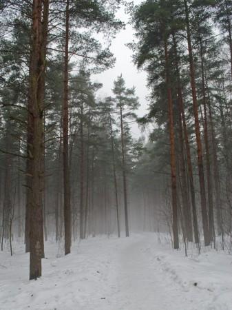 Тишина и туман