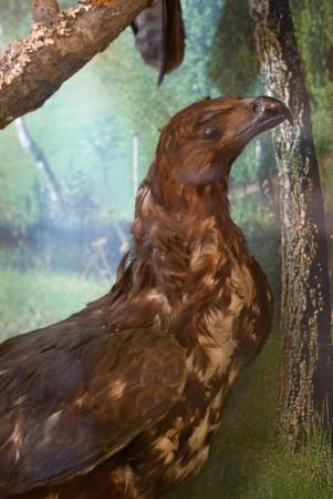 Птиц, неизвестной породы