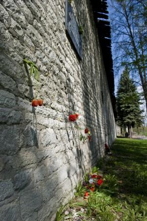 Цветы в крепостной стене Пскова
