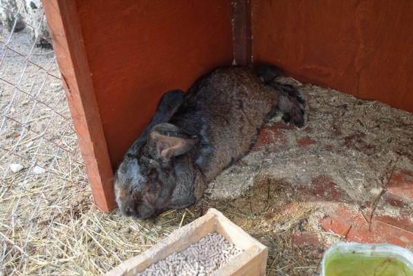 Огромный кроль