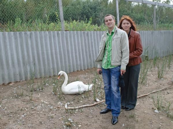 Лебедь не в восторге от съёмки