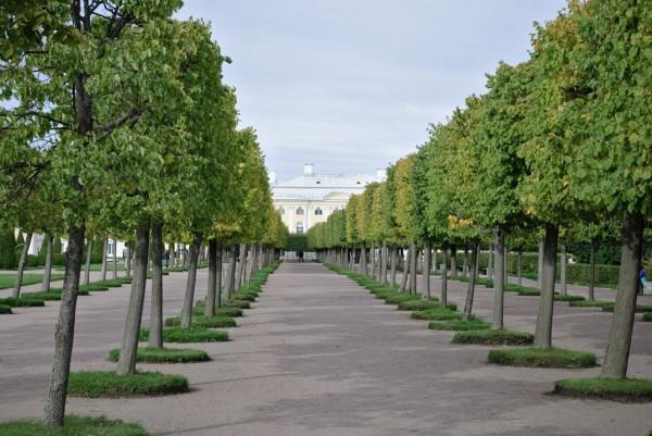 Аллея в верхнем парке Петродворца