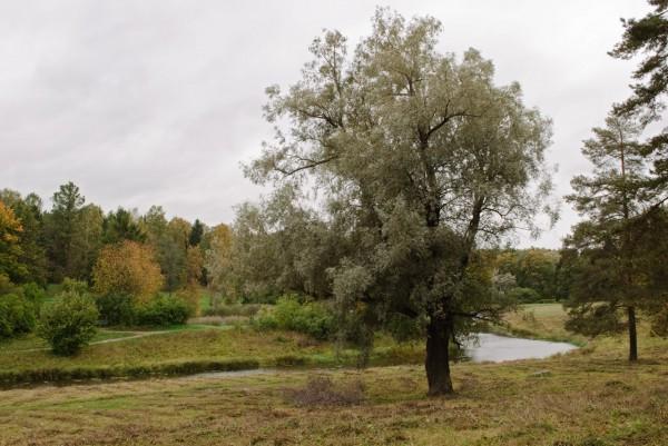 Пожелтевшая листва в Павловске