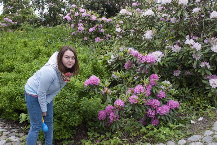 И рододендроны тоже цветут