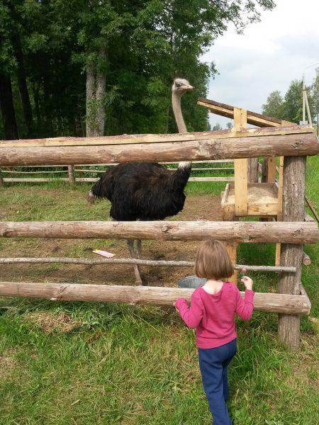 Маша и белорусский страус