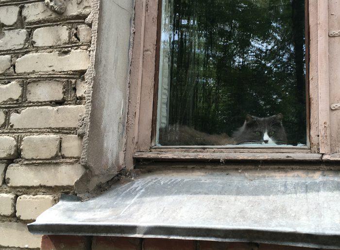 Минск кот во дворе