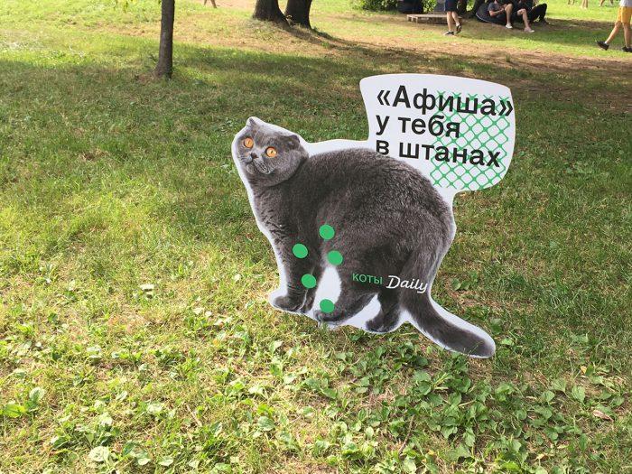 Таблички с котами на пикнике афиши
