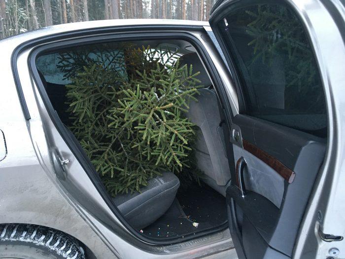 перевозка ёлки в салоне машины