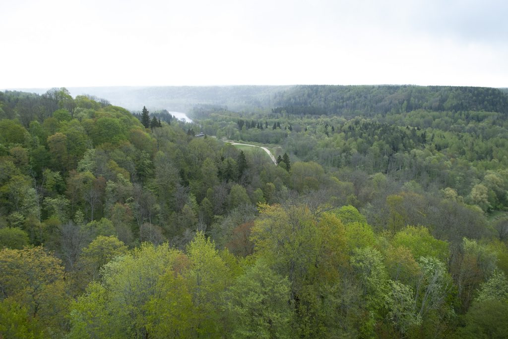 лес у башни турайдского замка