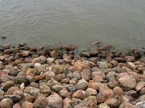 Цветущая вода в заливе