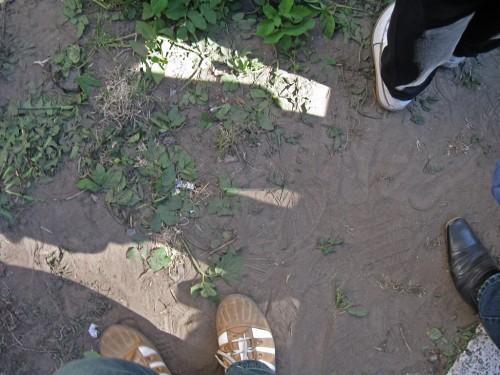 Затоптанная трава