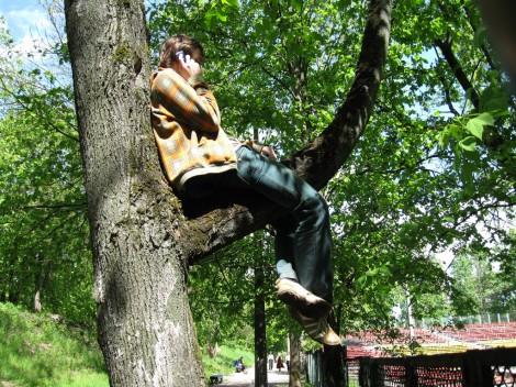 Разговор по мобильному телефону на дереве