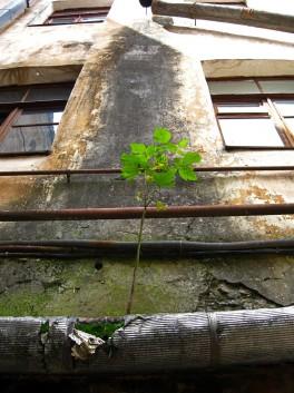Деревце растущее из трубы