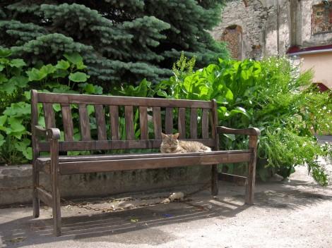 Спящий на скамейке кот