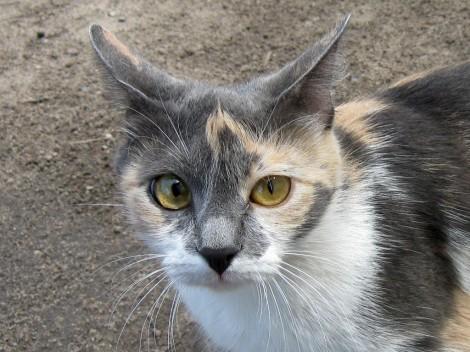 Кошка с рыжими глазами